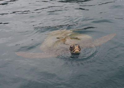 Und plötzlich schwamm ein Schwarm Schildkröten ums Boot herum.