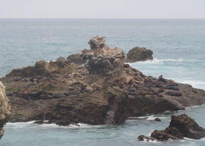 Eine Seehund-Kolonie.